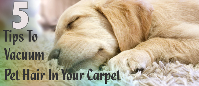 5 Tips To Vacuum Pet Hair In Your Carpet